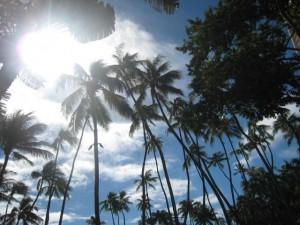 青空と椰子